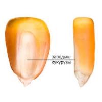 Масло зародышей кукурузы